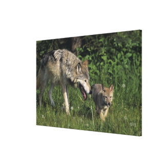 Wolf mother with young pup canvas print