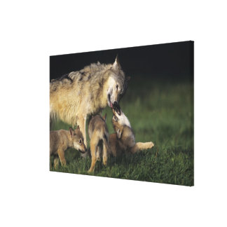 Wolf mother with young pups canvas print
