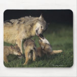 Wolf mother with young pups mouse pad