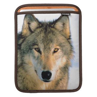 Wolf nature  Rickshaw ipod/laptop case