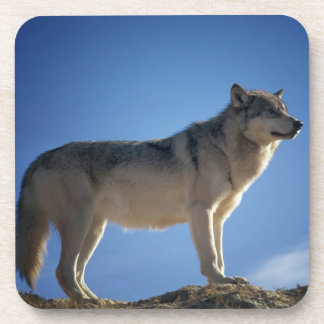 Wolf On Rocks Drink Coaster