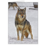 Wolf on Santa Watch Holiday Card