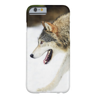 Wolf on the prowl barely there iPhone 6 case
