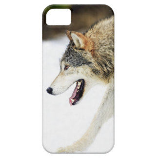 Wolf on the prowl case for the iPhone 5