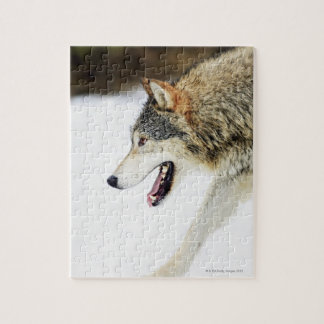 Wolf on the prowl jigsaw puzzle