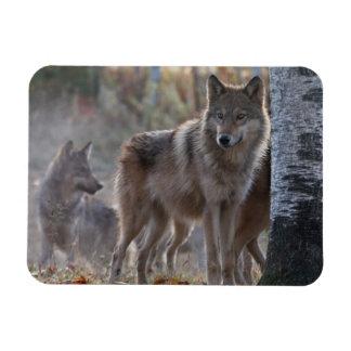 Wolf pack rectangular photo magnet