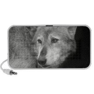 Wolf Pack Leader copy.jpg Travelling Speaker