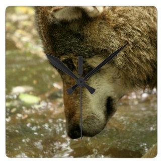 Wolf Pawing Water Wallclock