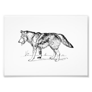 Wolf Photo Art