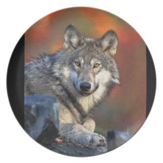 Wolf plates
