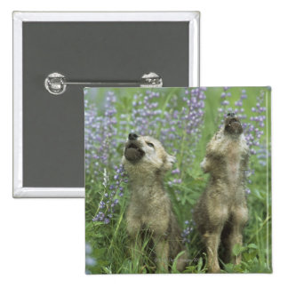 Wolf Puppies Howling In Meadow 15 Cm Square Badge