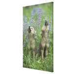 Wolf Puppies Howling In Meadow Gallery Wrapped Canvas