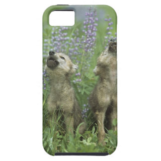 Wolf Puppies Howling In Meadow iPhone 5 Covers