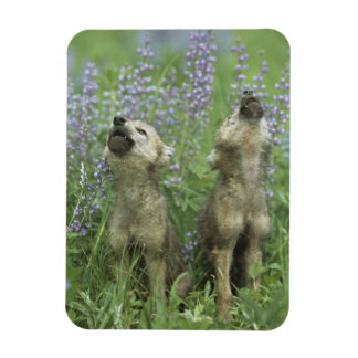 Wolf Puppies Howling In Meadow Rectangular Photo Magnet