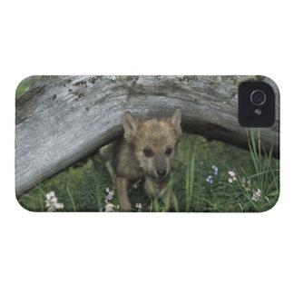 Wolf Puppy Going Under Log iPhone 4 Case