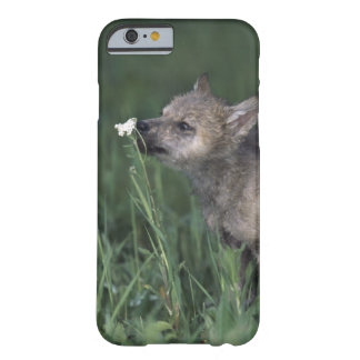 Wolf Puppy Sniffing Mountain Wildflower Barely There iPhone 6 Case