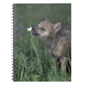 Wolf Puppy Sniffing Mountain Wildflower Notebooks