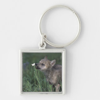 Wolf Puppy Sniffing Mountain Wildflower Silver-Colored Square Key Ring
