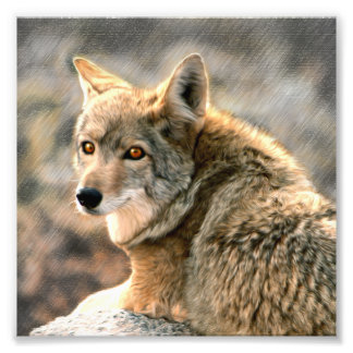Wolf Rain Graphic Art Photo Print
