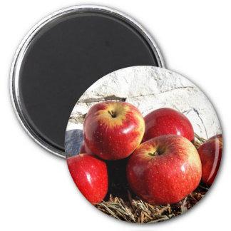 Wolf River Apples 6 Cm Round Magnet