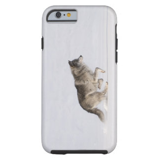 Wolf running in the snow 2 tough iPhone 6 case
