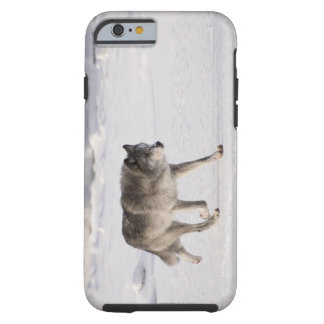 Wolf running in the snow tough iPhone 6 case