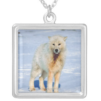 Wolf Silver Plated Necklace