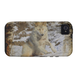 Wolf & Snow Wolf-Lover Wild Animal Alpha Male Vibe iPhone 4 Cases