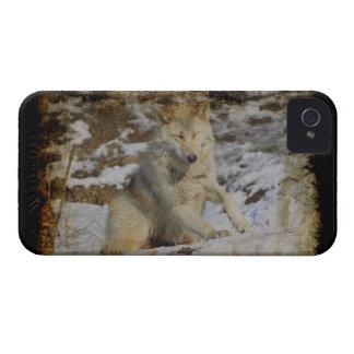Wolf & Snow Wolf-Lover Wild Animal Alpha Male iPhone 4 Case-Mate Case