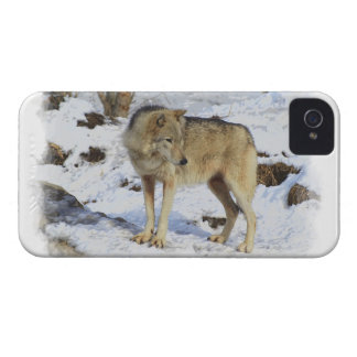 Wolf & Snow Wolf-Lover Wild Animal Alpha Male iPhone 4 Case-Mate Cases