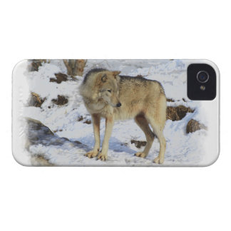 Wolf & Snow Wolf-Lover Wild Animal Alpha Male iPhone 4 Covers