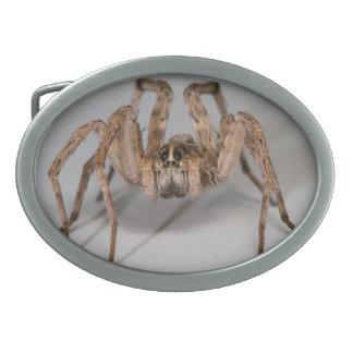 Wolf Spider Belt Buckle