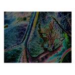 Wolf Spider Nebula Postcard