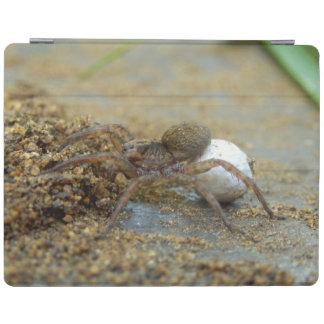 Wolf Spider With Egg Sac iPad Cover