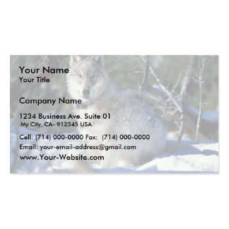 Wolf watches biologists in Yellowstone National Pa Business Card Template