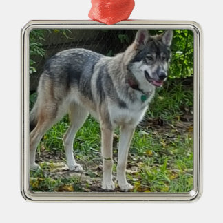 Wolfdog in fall Silver-Colored square decoration