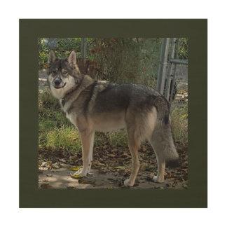Wolfdog in fall wood print