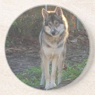 Wolfdog in sunlight coaster