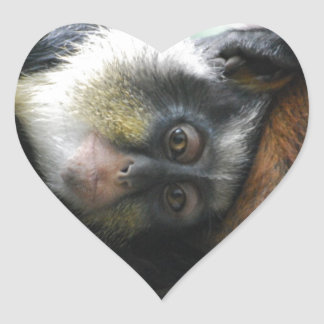 Wolf's Guenon Stickers