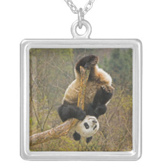 Wolong Panda Reserve, China, 2 1/2 yr old Silver Plated Necklace