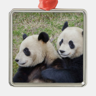 Wolong Reserve, China, Giant panda hugging Silver-Colored Square Decoration