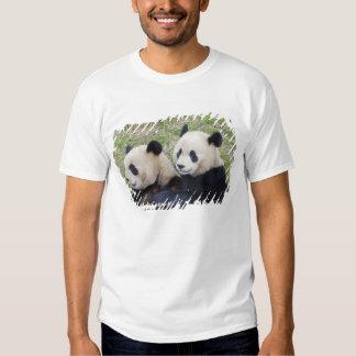 Wolong Reserve, China, Giant panda hugging T Shirts