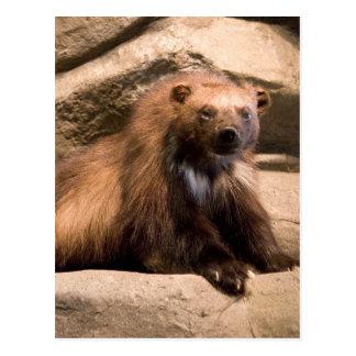 Wolverine Postcard