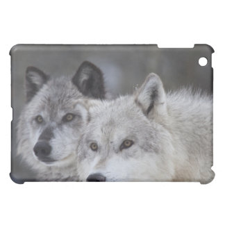 Wolves (Canus lupus) from West Yellowstone. This Case For The iPad Mini