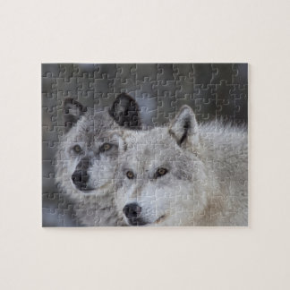 Wolves (Canus lupus) from West Yellowstone. This Puzzle