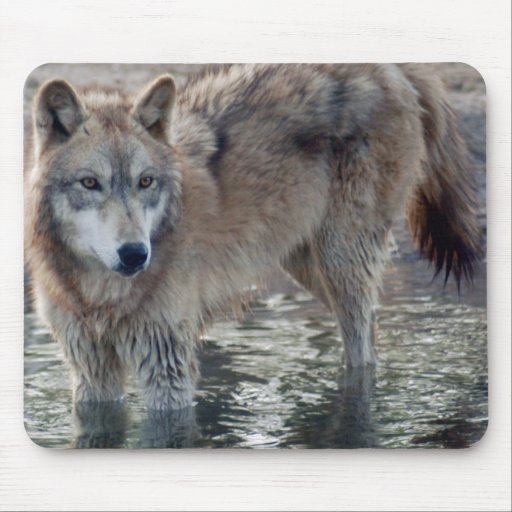 Wolves Grey Wolf Mousepad