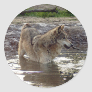 Wolves Grey Wolf Stickers