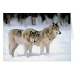 WOLVES IN SNOW  HOLIDAY CARD