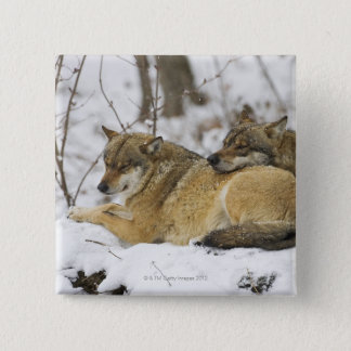 Wolves in the Bawarian Wood 15 Cm Square Badge