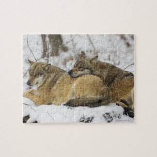 Wolves in the Bawarian Wood Jigsaw Puzzle